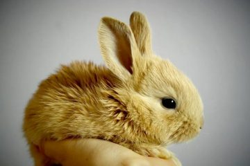 How to Tell How Old a Baby Rabbit Is