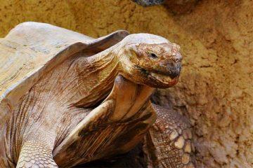 Do Tortoises Bite